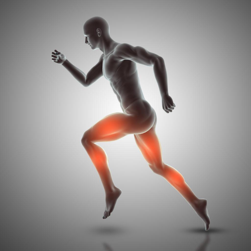 Plyometric movement leg muscles